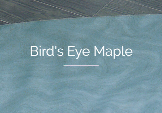 Bird's Eye Maple Header